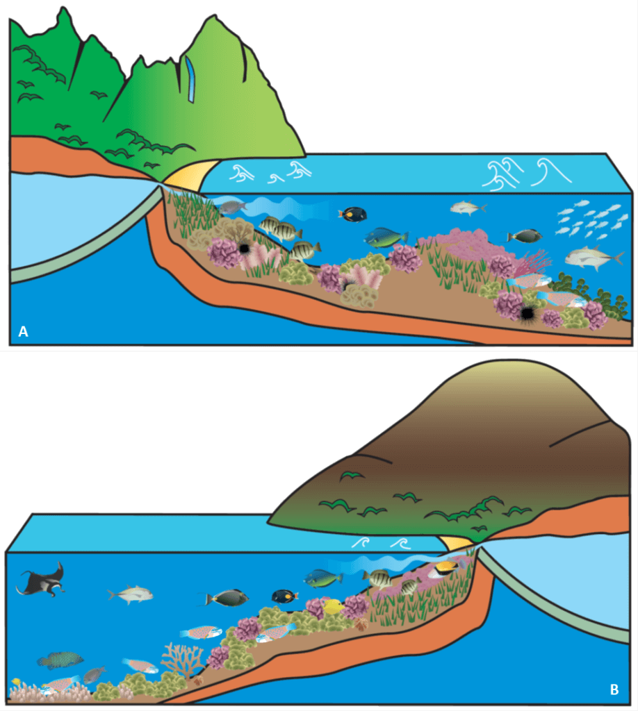 Illustrations of the coral reefs