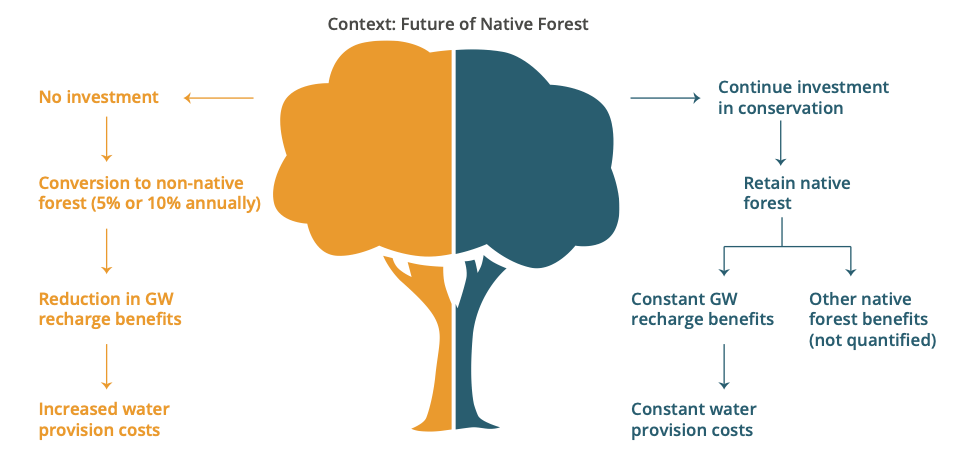 Context: Future of Native Forest