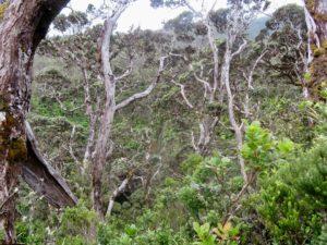 Waikamoi